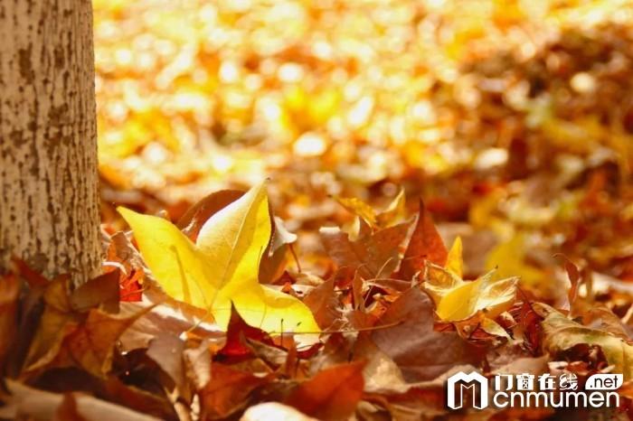 比秋色更撩人的是红橡树净音门窗,让你看到不一样的风景